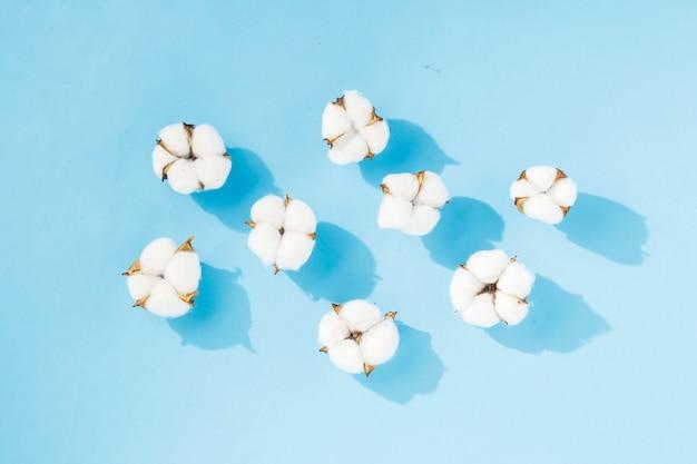 Geöffnete baumwollblumen auf blauem hintergrund. das konzept der natürlichen stoffe, baumwolle, kosmetik. flache lage, draufsicht.