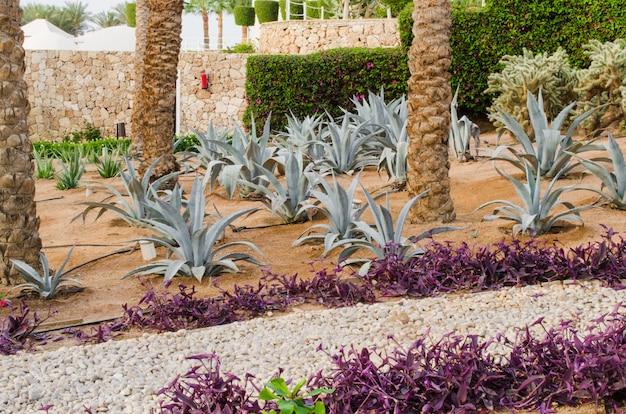 Gepflegte parkanlage mit palmen und kakteen.