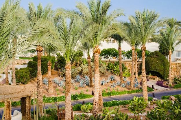Gepflegtes parkgelände eines fünf-sterne-hotels in sharm el sheikh.