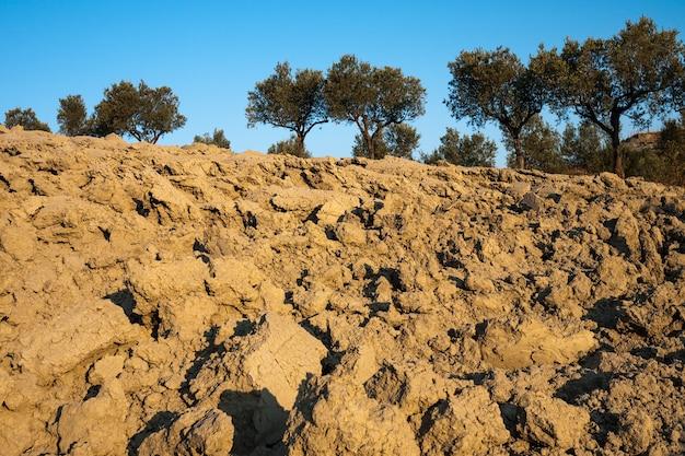 Gepflügtes land mit jahrhundertealten olivenbäumen im hintergrund süditalien