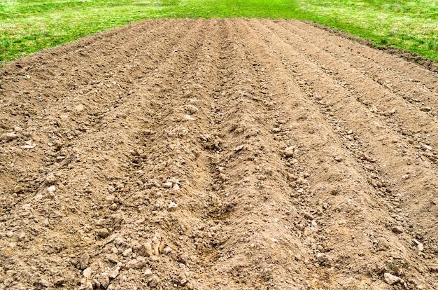 Gepflügtes landfeld in einer ländlichen umgebung, frühlingsgras und frische ernten.