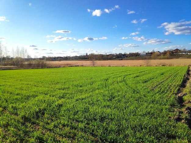Gepflügtes landwirtschaftliches feld bereit für die aussaat, den pflanzprozess, das gepflügte feld mit furchen und grünem gras.