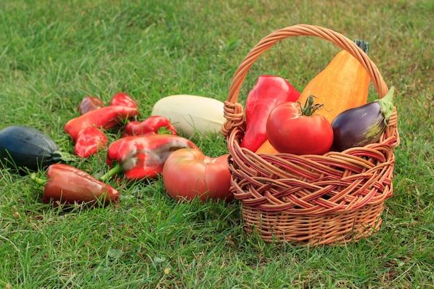 Gerade gepflückte zucchini, aubergine, tomate und paprika mit weidenkorb, gießkanne und blumen auf grünem gras. gerade geerntetes gemüse.
