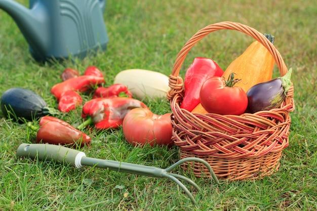 Gerade gepflückte zucchini, aubergine, tomate und paprika mit weidenkorb, rechen und gießkanne auf grünem gras. gerade geerntetes gemüse.