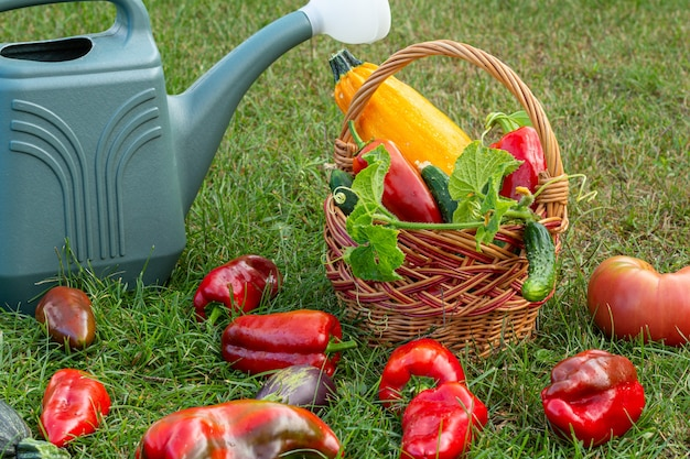 Gerade gepflückte zucchini, auberginen, tomaten und paprika mit einem weidenkorb und einer gießkanne auf grünem gras. gerade geerntetes gemüse.