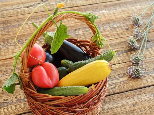 Gerade tomaten, gurken, auberginen und einen kürbis im weidenkorb auf den alten holzbrettern gepflückt. gerade geerntetes gemüse. ansicht von oben.