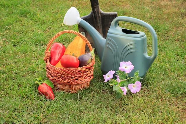 Gerade zucchini, aubergine, tomate und paprika in einem weidenkorb, gießkanne, spaten und blumen auf grünem gras gepflückt. gerade geerntetes gemüse.
