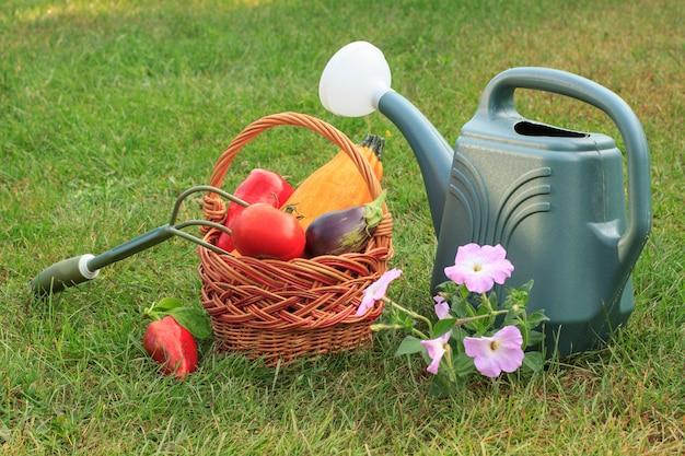 Gerade zucchini, aubergine, tomate und paprika in einem weidenkorb, handrechen, gießkanne und blumen auf grünem gras gepflückt. gerade geerntetes gemüse.