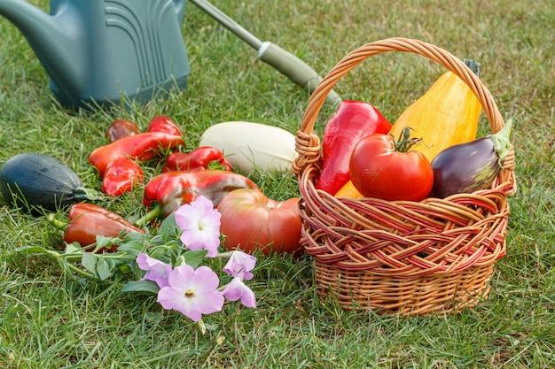 Gerade zucchini, auberginen, tomaten und paprika mit einem weidenkorb, einem rechen und einer gießkanne auf grünem gras gepflückt. gerade geerntetes gemüse.