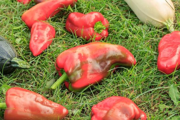 Gerade zucchini, auberginen und paprika auf grünem gras gepflückt. gerade geerntetes gemüse. Premium Fotos