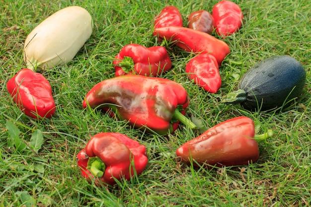 Gerade zucchini, kürbis und paprika auf grünem gras gepflückt. gerade geerntetes gemüse.