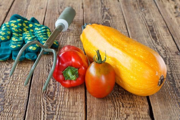Gerade zucchini, tomate und paprika mit handrechen und gartenhandschuhen auf alten holzbrettern gepflückt. gerade geerntetes gemüse. ansicht von oben.
