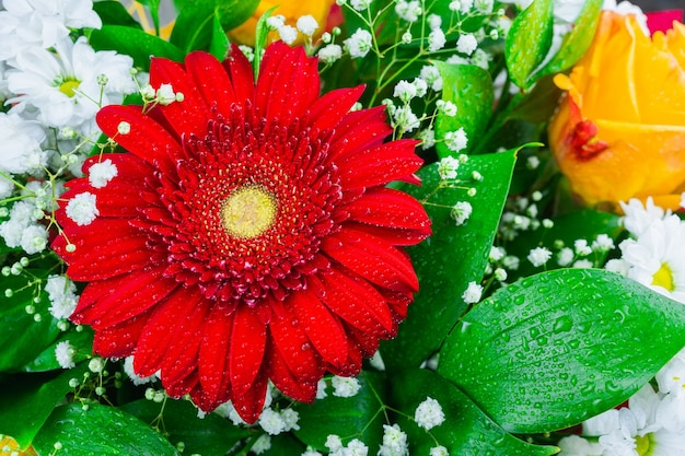 Gerbera chrysantheme und rose