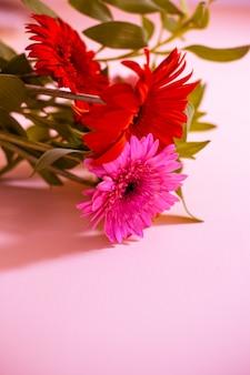 Gerbera-frühlingsblumen auf violettem hintergrund, unscharfer hintergrund