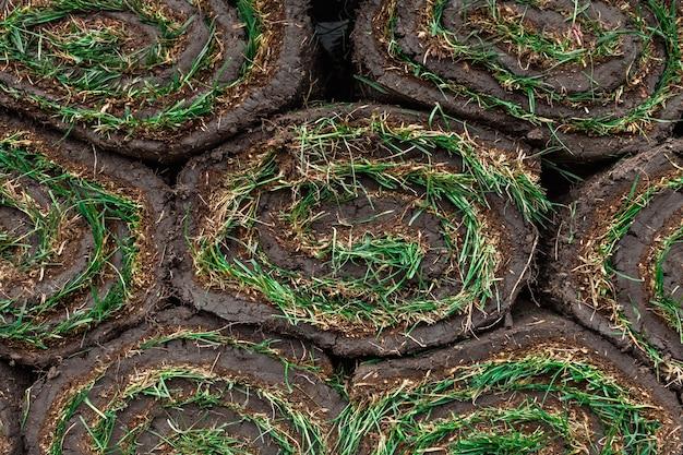 Gerollte grüne grasnarben als hintergrund
