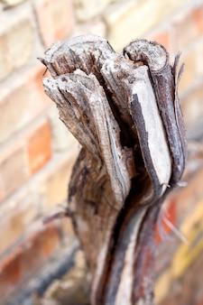 Gesägter getrockneter weinstock auf backsteinmauerhintergrund. ökologie- und umweltproblemkonzept