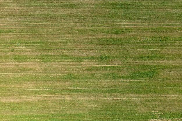 Gesätes landwirtschaftliches feld, ansicht von oben