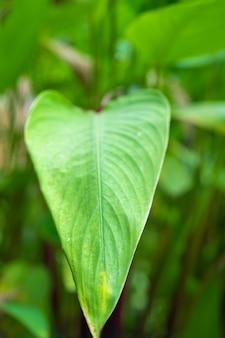 Gesättigtes grünes blatt einer tropischen pflanze