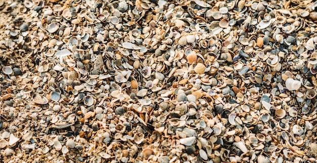 Gesamtplan einer großen anzahl von muscheln im sand. textur von muscheln. marine themenhintergründe. panoramablick