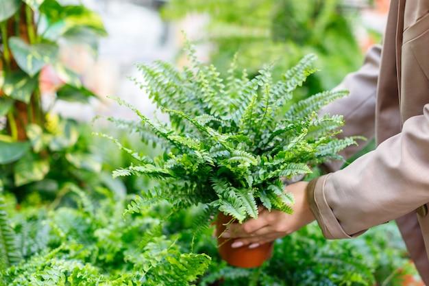 Geschäftsfrau, die topfpflanzen üppigen nephrolepisfarn für ihr haus / wohnung im blumenladen wählt