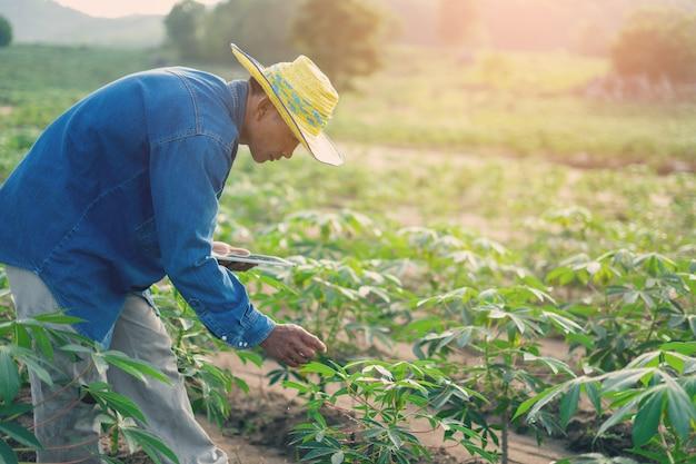 Geschäftsmannlandwirt, der die tablette steht auf dem maniokafeld hält. smart farmer-konzept.