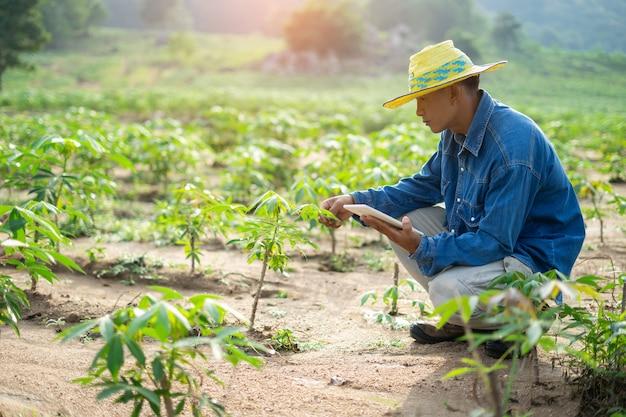 Geschäftsmannlandwirt, der die tablette steht auf dem maniokagebiet hält.