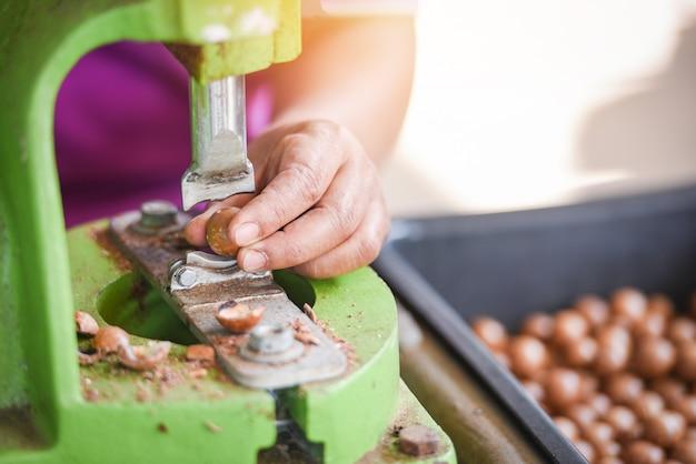 Geschälte, rissige macadamia-nüsse zum trocknen - geschälte und ungeschälte macadamia-nüsse zum verpacken