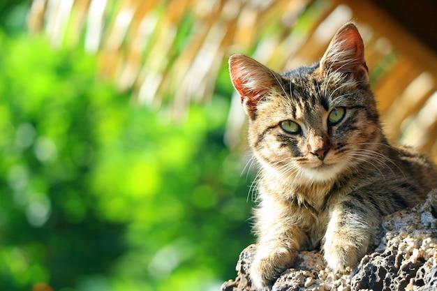 Geschlossen herauf ein nettes kätzchen, das unter dem baum-schatten, osterinsel, chile sich entspannt