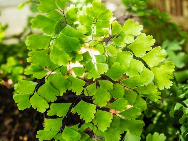 Geschlossener kleiner grünpflanzehintergrund im gepflanzten topf