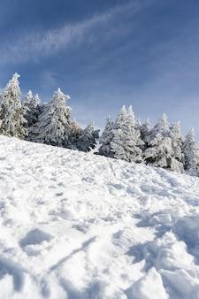 Geschneiter kiefer treer im skiort von sierra nevada