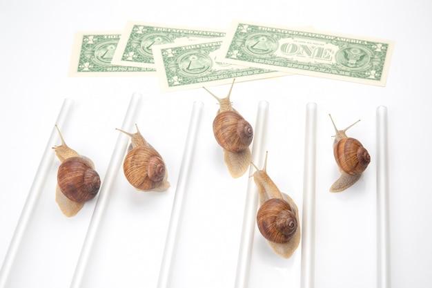 Geschwindigkeit, um finanzielles wohlergehen zu erreichen. schnecken rennen mit geld bis zur ziellinie.