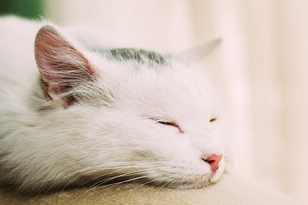 Gesicht eines schlafenden katzenabschlusses oben