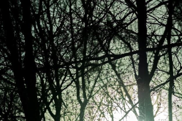 Gespenstischer dunkler wald mit sonnenlicht