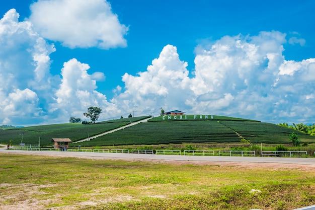 Gestalten sie ansicht der teeplantage an am choui fong bauernhof, chiang rai, thailand landschaftlich