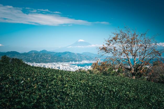 Gestalten sie bild des berges fuji mit feld des grünen tees tagsüber in shizuoka, japan landschaftlich.
