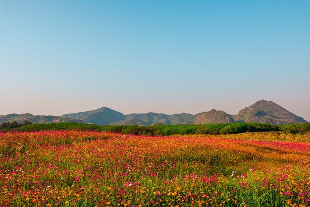 Gestalten sie den naturhintergrund des berges und der wiese landschaftlich, die bedeckt werden