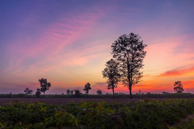 Gestalten sie magischen sonnenaufganghimmel mit winterschattenbildbaum-naturhintergrund landschaftlich.
