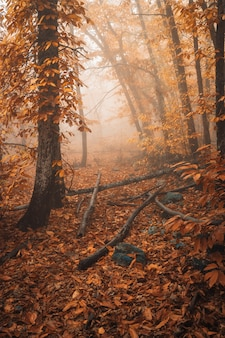 Gestalten sie mit nebel in einem kastanienwald nahe montanchez landschaftlich. extremadura. spanien.