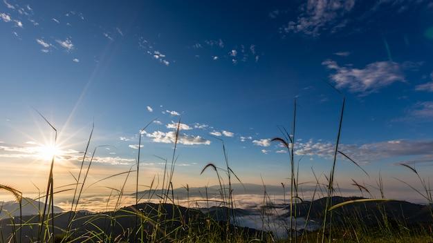Gestalten sie naturansicht am morgen auf dem gebirgsnebel chiang rai thailand landschaftlich