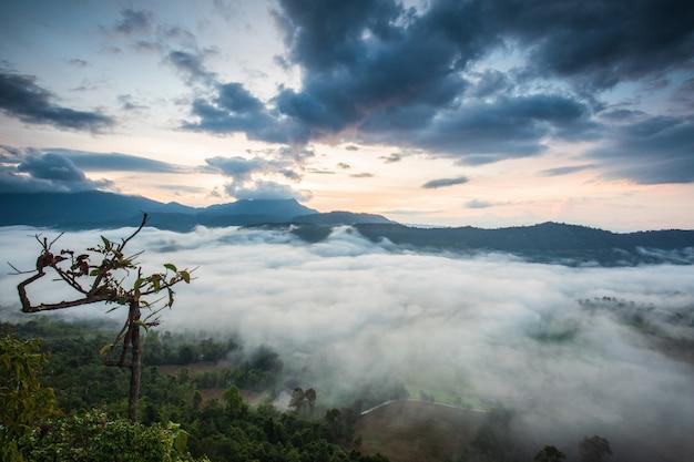 Gestalten sie nebelmeer auf hohem berg in nakornchoom, phitsanulok-provinz, thailand landschaftlich.