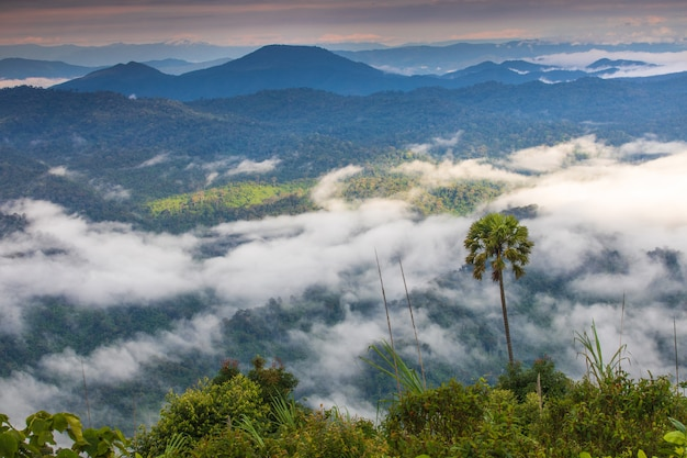 Gestalten sie nebelmeer auf hohem berg in phitsanulok-provinz, thailand landschaftlich.