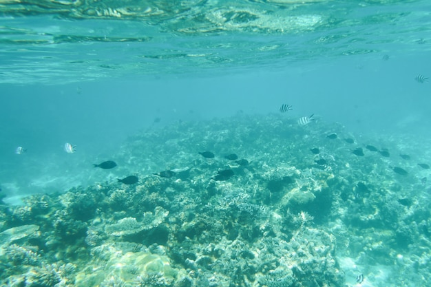 Gestalten sie ökosystem der ozeangrün-lebenalgen unter wasser landschaftlich