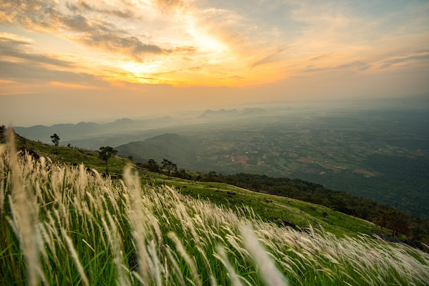 Gestalten sie sonnenaufgang auf dem berg mit weißer blume des feld- und wiesengrüngras und schönem wolkenhimmel landschaftlich