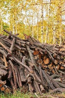 Gestapelte baumstämme im wald. stapel geschnittenes holz. holzstämme, holzeinschlag, industrielle zerstörung. wälder illegal verschwinden. umweltkonzept, illegale entwaldung.