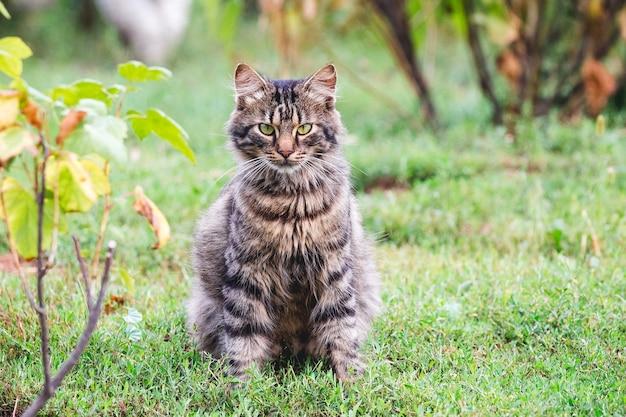 Gestreifte flauschige katze sitzt im herbst im garten zwischen den büschen im gras