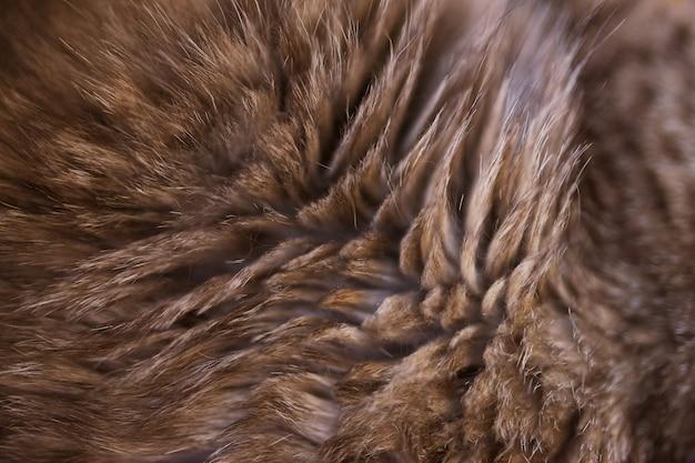 Gestreifte katze der hintergrundbeschaffenheit. gestreifte wolle des katzenhaares befleckte beschaffenheitshintergrund