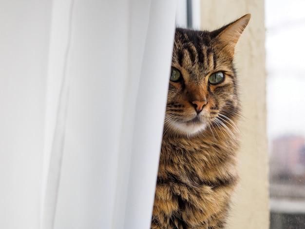 Gestreifte schöne katze auf der fensterbank