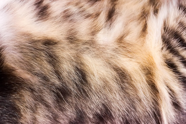 Gestreifter katzenpelz der hintergrundbeschaffenheit, nahes hohes der wolle
