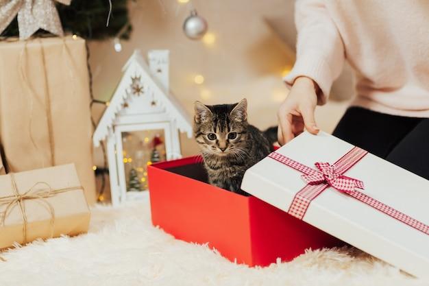 Gestreiftes kätzchen, das aus einer geschenkbox herausschaut.