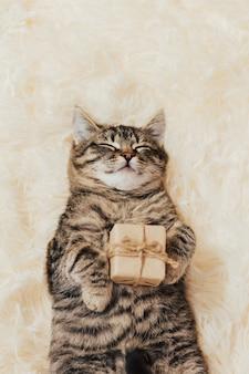Gestreiftes kätzchen schläft mit kleiner geschenkbox.